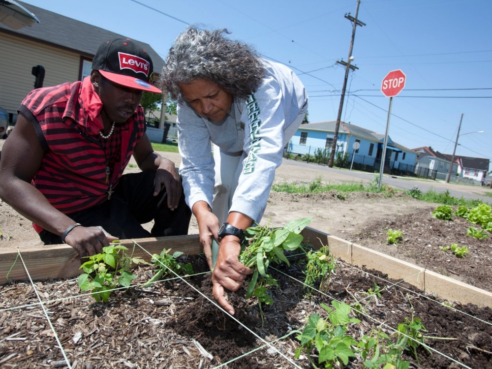 Gardeners work together in an urban garden.