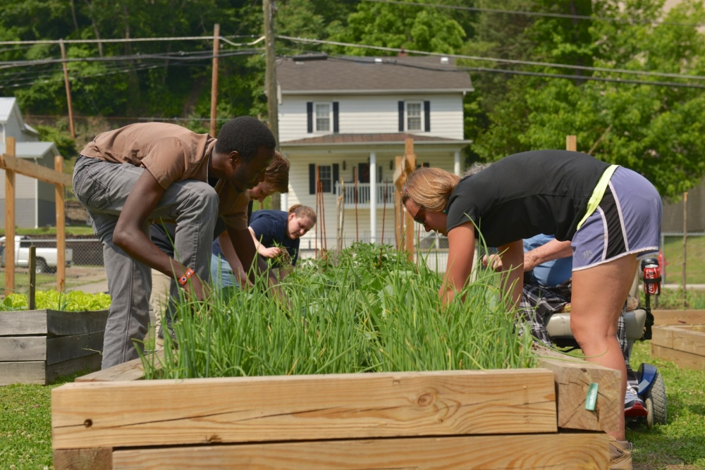 Volunteers plant vegetables in the community garden.