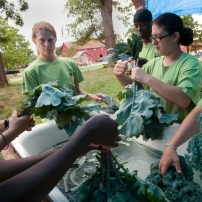 High school students wash Kale leaves.