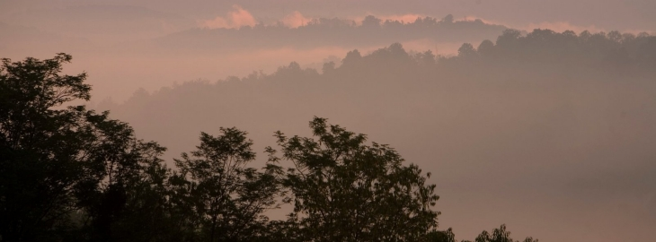 A misty scene of trees and sky.