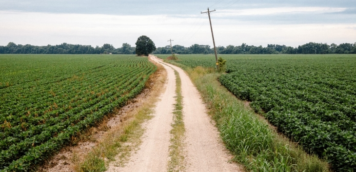 Dirt road cuts through agricultural fields.