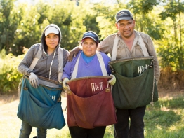 A family working together in an orchard.