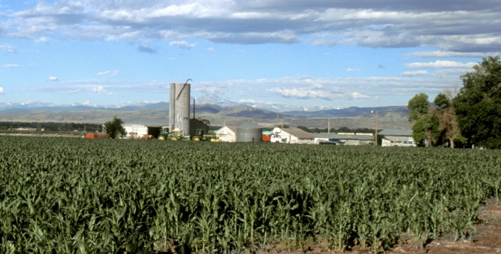 A corn production farm.