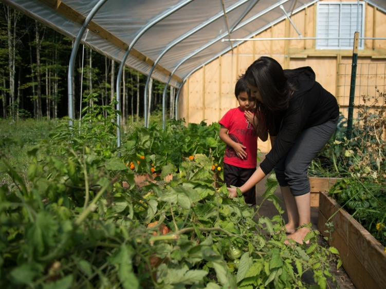 A mother and son pick vegetables in a greenhouse.