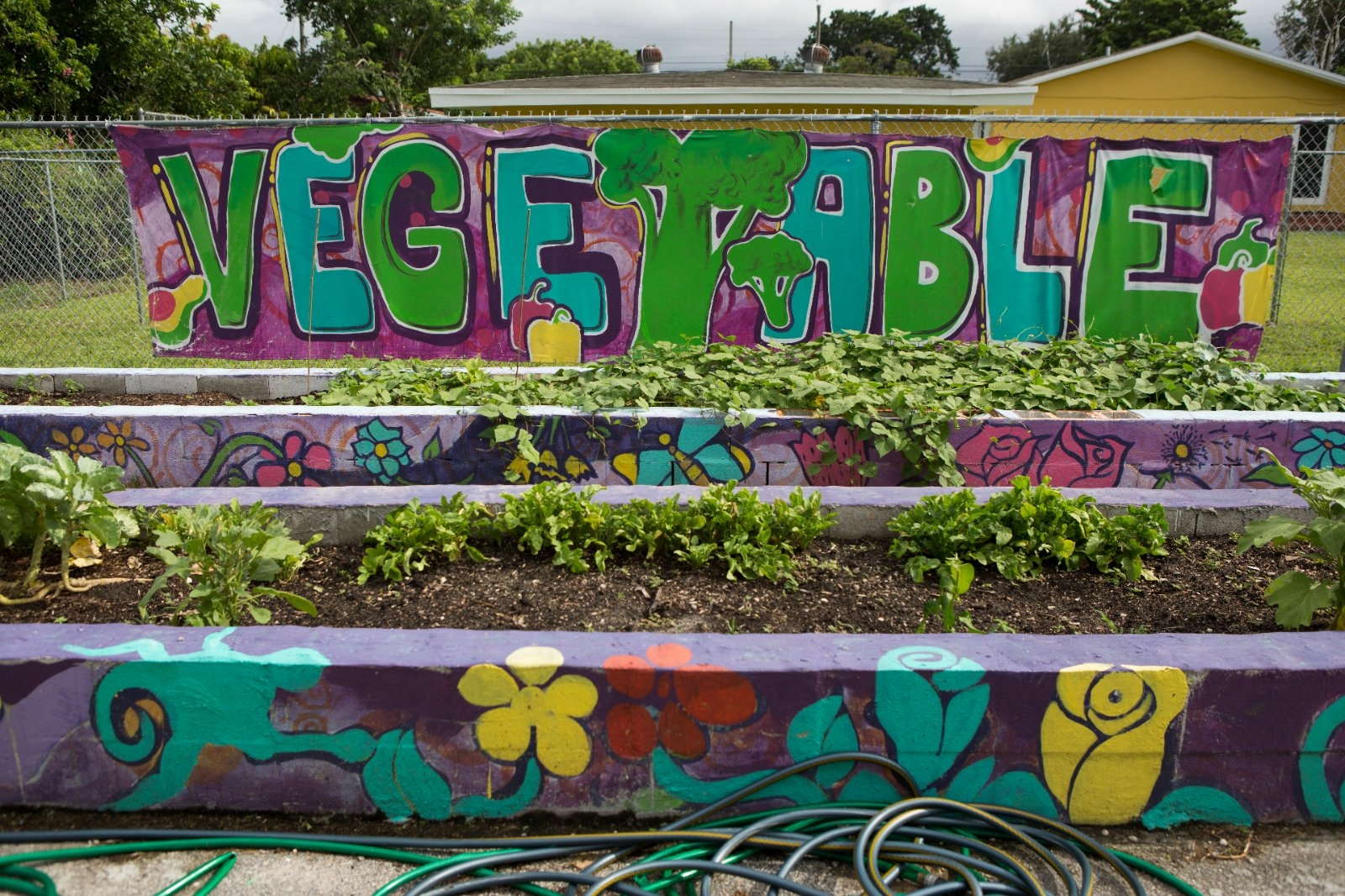 A community garden growing vegetables.