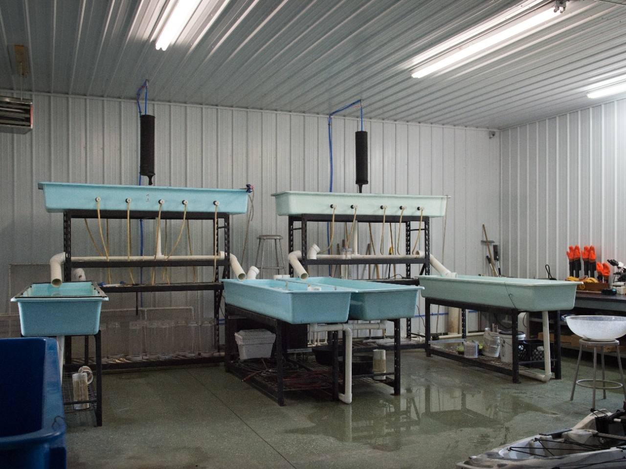 The interior of a salmon hatchery.
