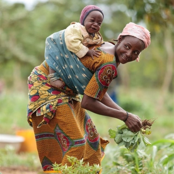 A mother picks vegetables with a baby secured to her back.