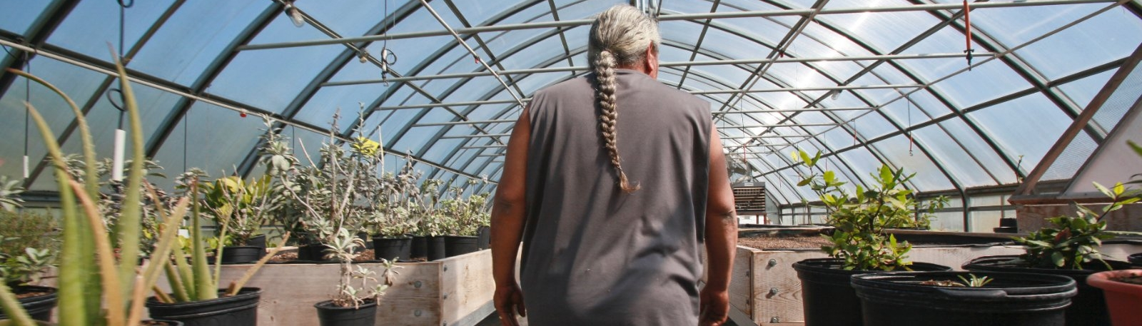 A man walking past plants in a greenhouse.